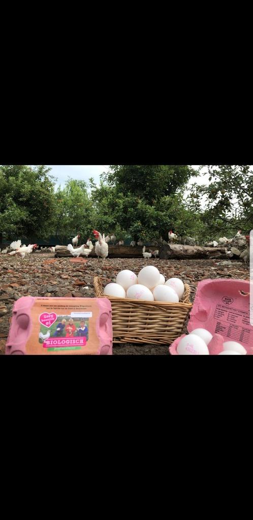 Eieren zorgboerderij Groot Wagensveld
