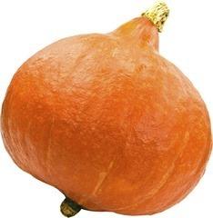 Pompoen Oranje ( op bestelling )