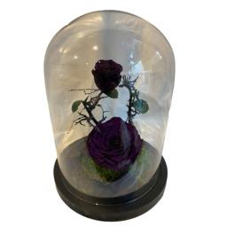 GLAZEN Rozen stolp met 2 long lasting rozen donker paars