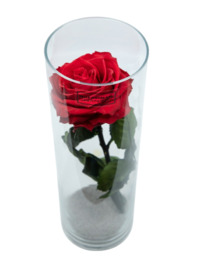Vaas met 1 grote rode eternal roos